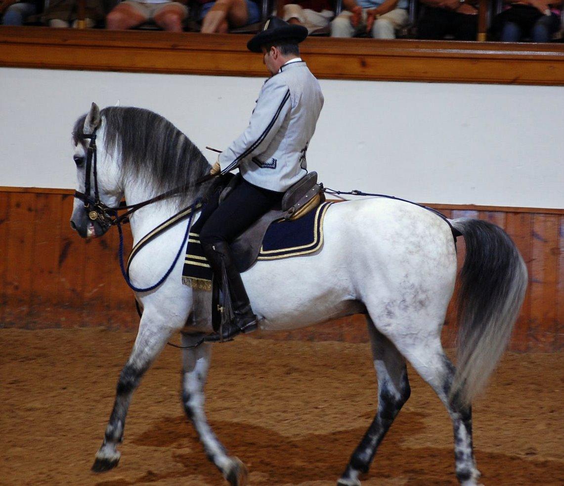 Royal Andalusian School Of Equestrian Art Jerez De La
